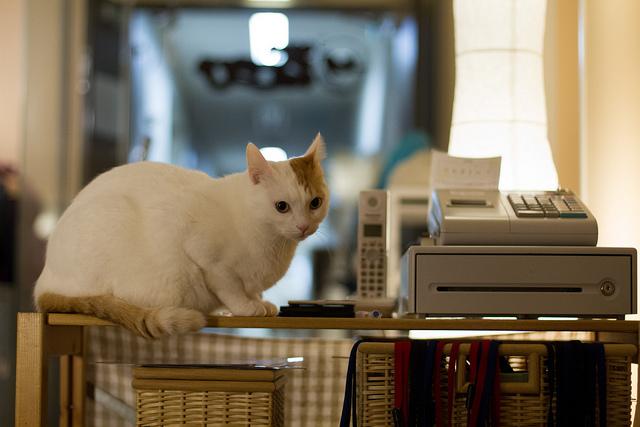Wo Sind Katzen Cafe In Essen