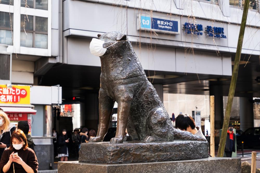 Hachi-Ko. Ein Hundeleben