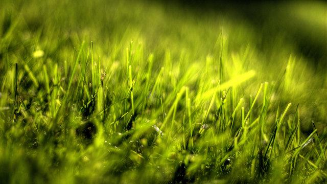Grasfresser versetzen Japan in Aufregung