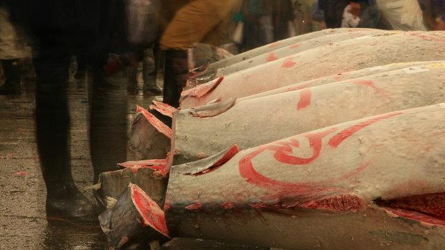 Rekordpreis für einen Thunfisch
