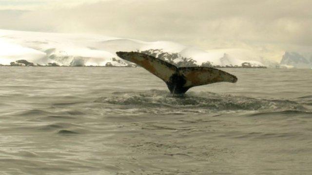 Eine harmlose Wal-Expedition