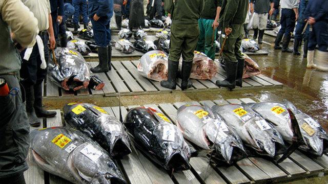 «Die Natur wird nun die Sanktionen auferlegen»