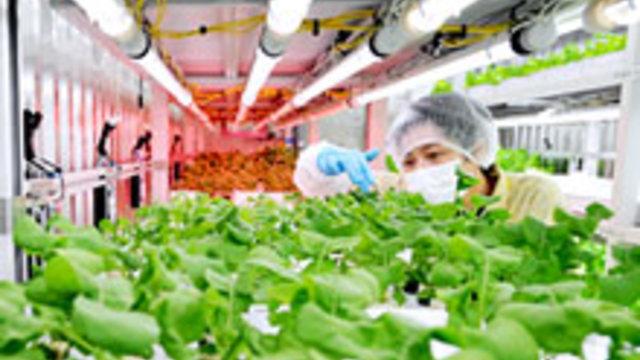 Gemüse- statt Autofabrik