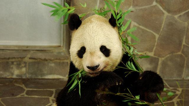 Vom Insel- zum Pandaproblem