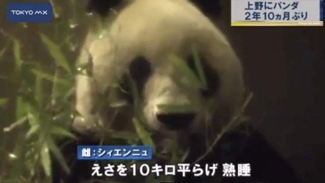 Pandas für stürmische Zeiten