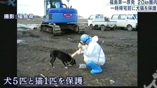 Die Hunde der Sperrzone