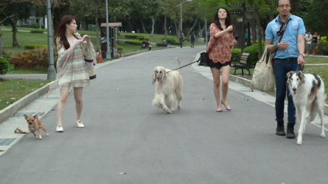 Taiwans neue Hundefreiheiten
