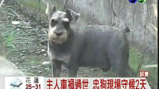 Taiwans Hachiko