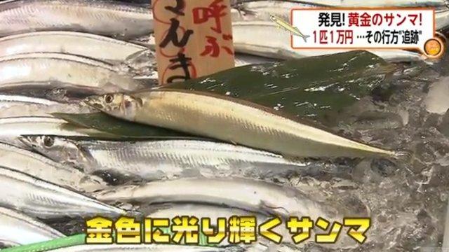 Der goldene Makrelenhecht