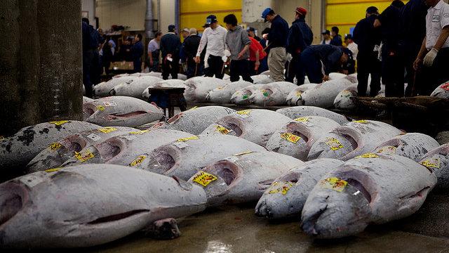 Der Thunfisch-Preissturz