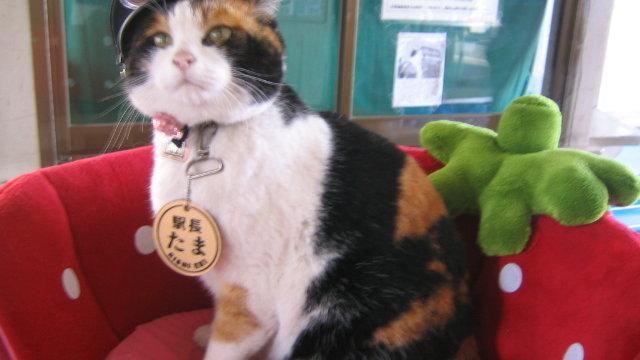 Eine Katze als Touristenmagnet