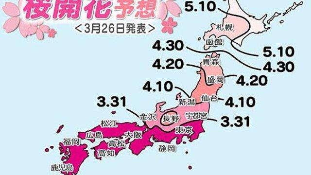 Die Kirschblüten-Karte
