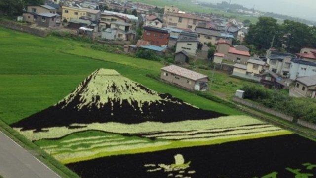 Der Fuji im Reisfeld