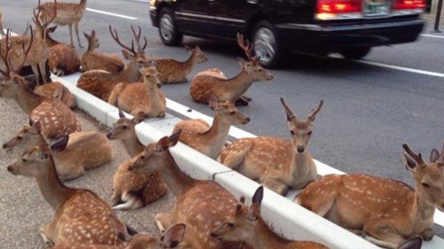 Die Sitzblockade der Hirsche