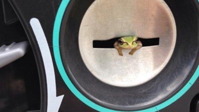 Der Frosch im Automat