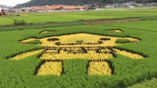 Ein niedliches Reisfeld