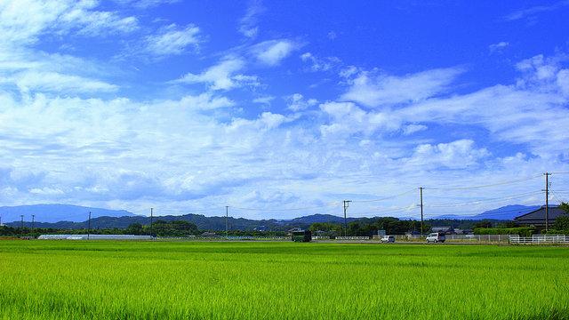 Fukushima exportiert wieder Reis