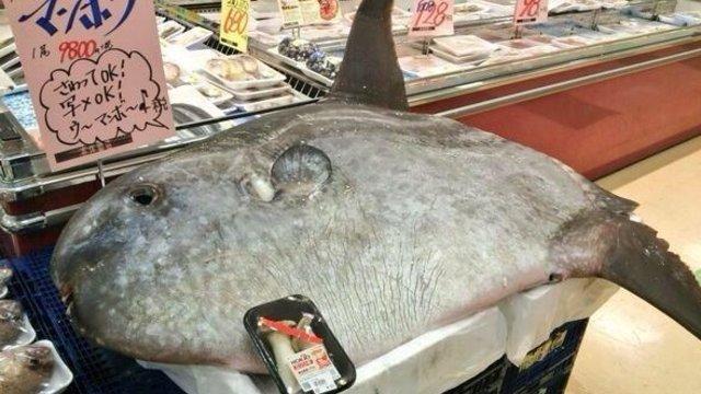 Ein Riesenfisch im Supermarkt
