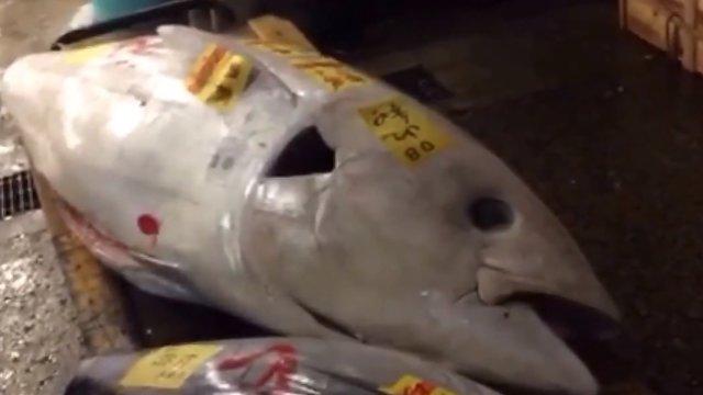 Der weisse Thunfisch