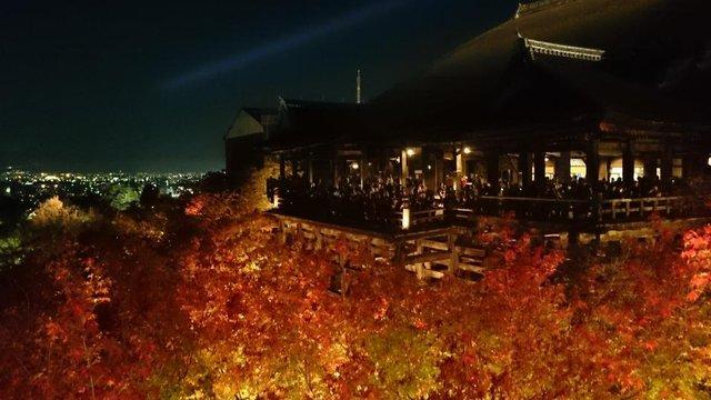 Nächtliche Herbstfarben