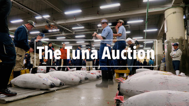 Die Thunfisch-Auktion in Tsukiji