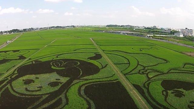 Ein gigantisches Reisfeld-Gemälde