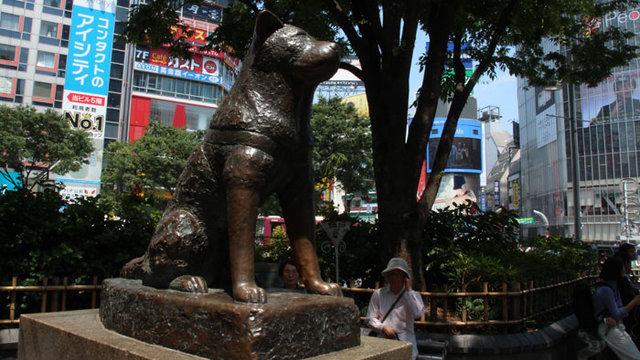 Eine neue Statue für Hachiko