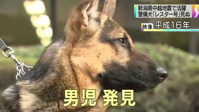Japans heldenhafter Rettungshund