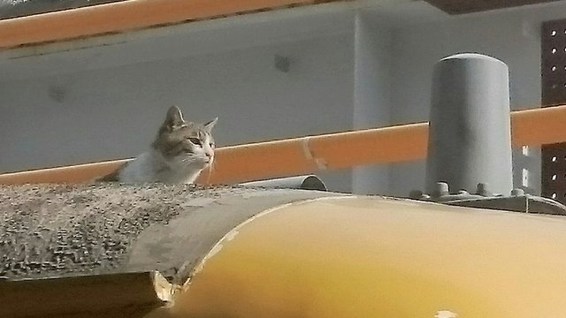 Die Katze auf dem Zug