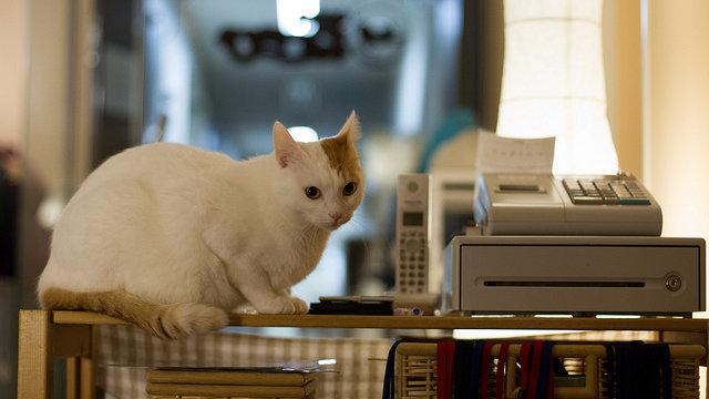 Japans Katzen-Cafés