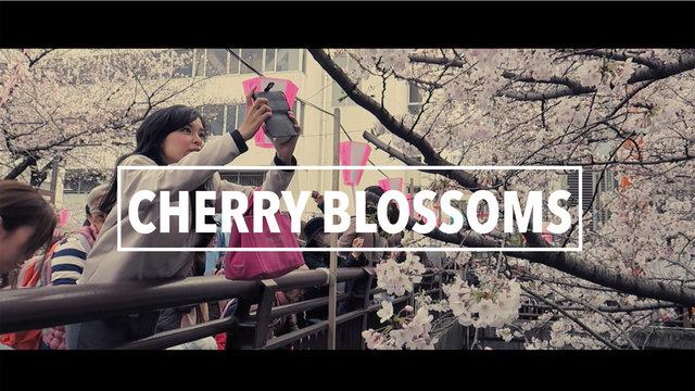 Perfekte Kirschblüten-Momente