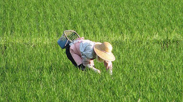 Japans greise Bauern