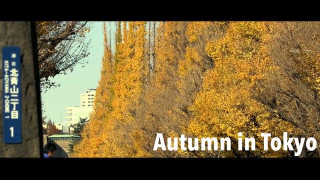 Herbstmagie: Tokios schönste Allee