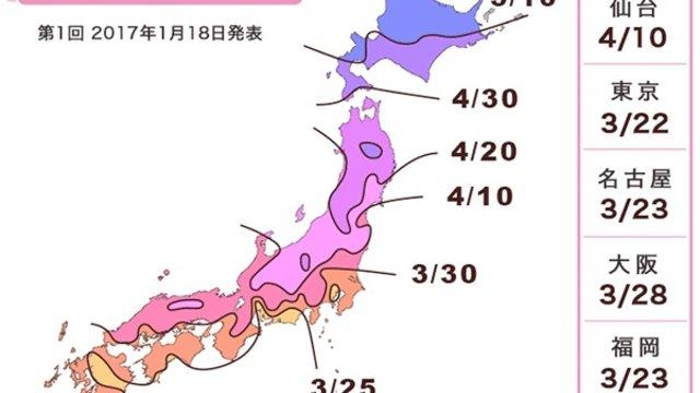 Die erste Kirschblüten-Prognose