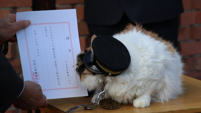 Japans berühmteste Katzen