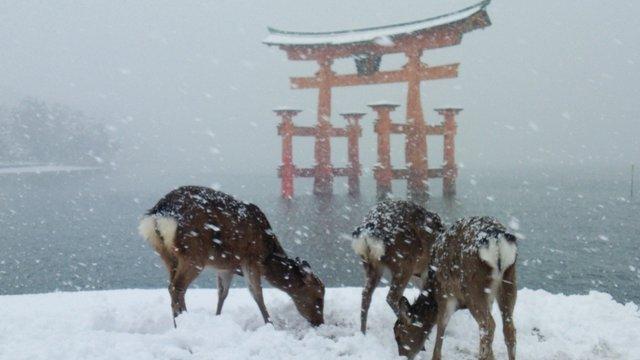 Winterland Japan