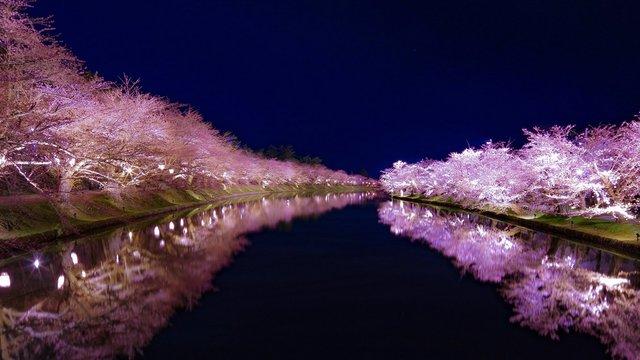 Die letzten Kirschblüten