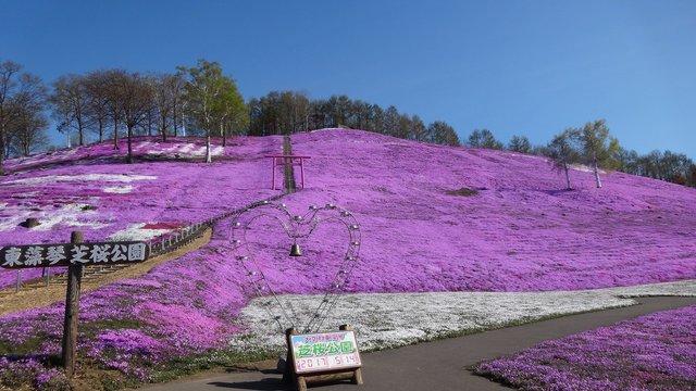 Der Blütenberg von Hokkaido