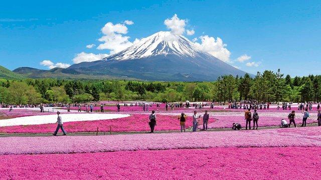 Die Blütenpracht und der Fuji