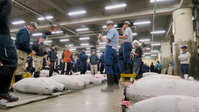 Die Zukunft von Tokios Fischmarkt