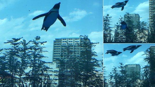 Fliegende Pinguine über Tokio
