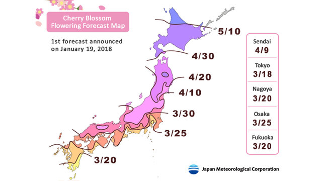 Die erste Kirschblüten-Prognose für 2018