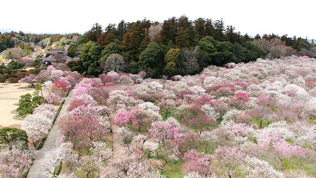 Die Stadt der Pflaumenblüten