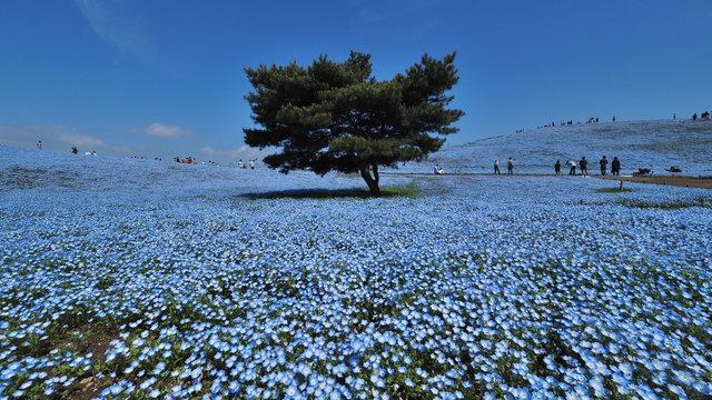 Der blaue Frühlingshügel