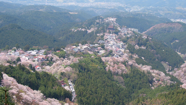 Der Kirschblüten-Berg von Yoshino