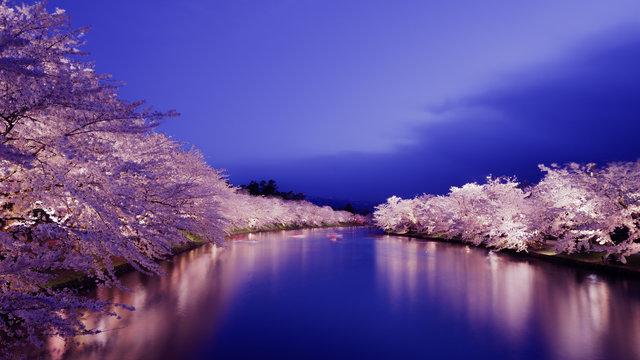 Kirschblütenzeit im Norden Japans