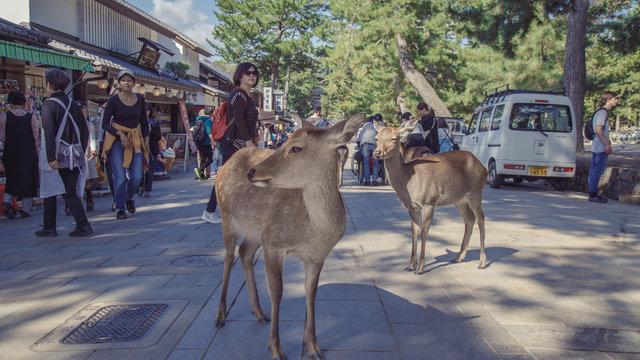 Regeln für den sicheren Umgang mit den Hirschen von Nara