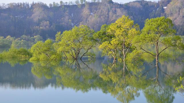 Der versunkene Wald von Yamagata