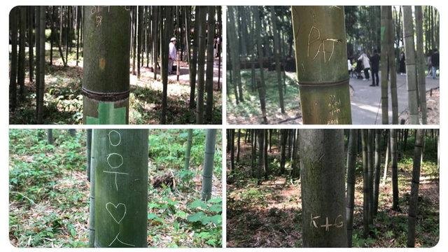 Die Beschädigung des Bambuswaldes von Arashiyama