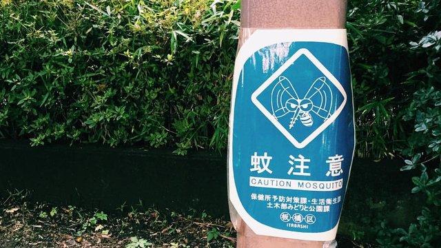 Mit der Hitze kommen die Stechmücken in Japan